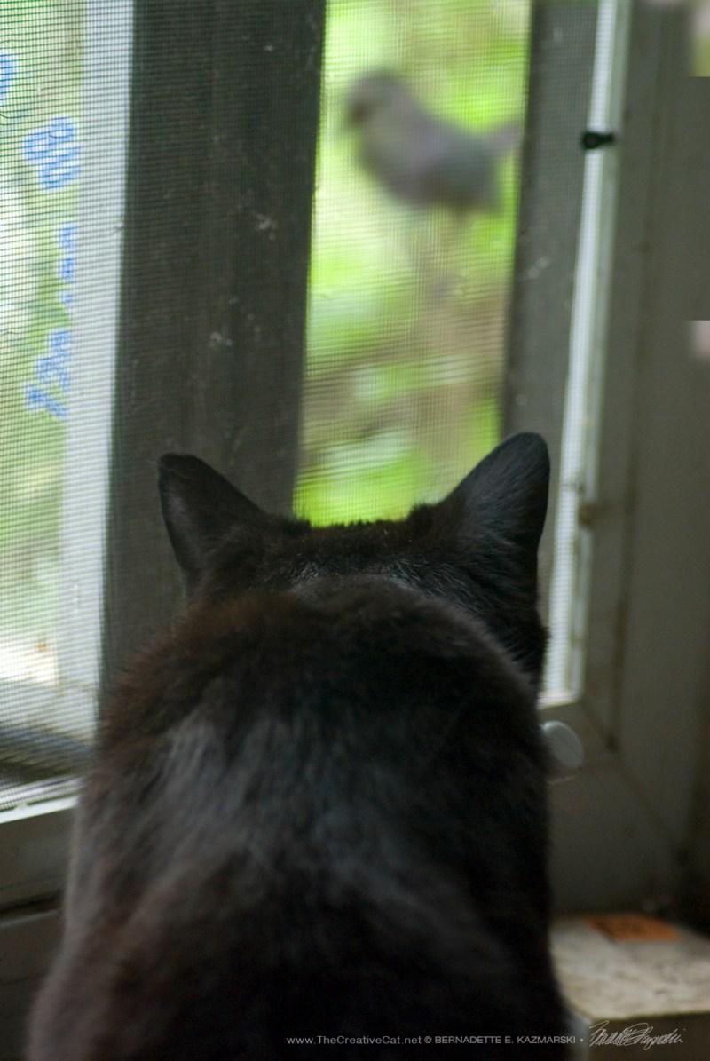 Bella has her eye on that catbird! Cat bird?