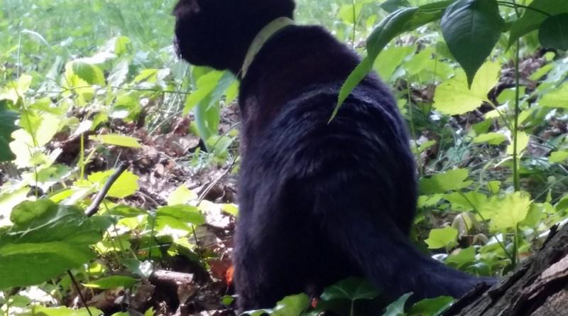 black cat under tree