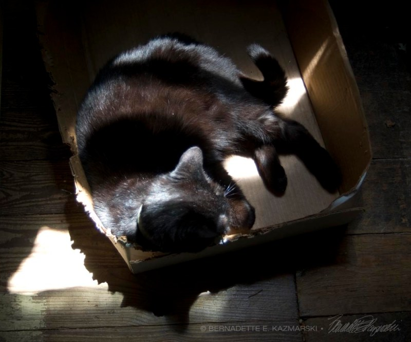 black cat in box in sun