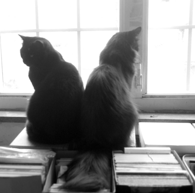 Bella and Hamlet at the sunny morning window.