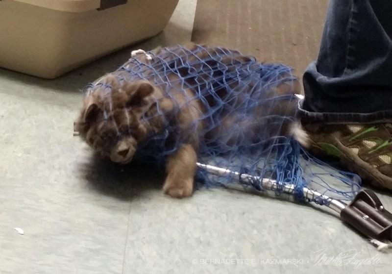 cat caught in net