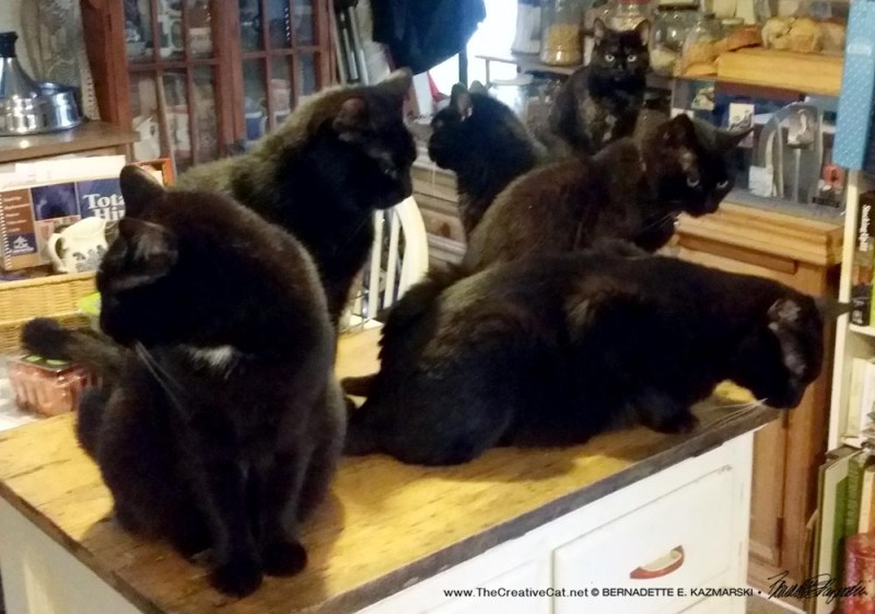 six catrs in the kitchen