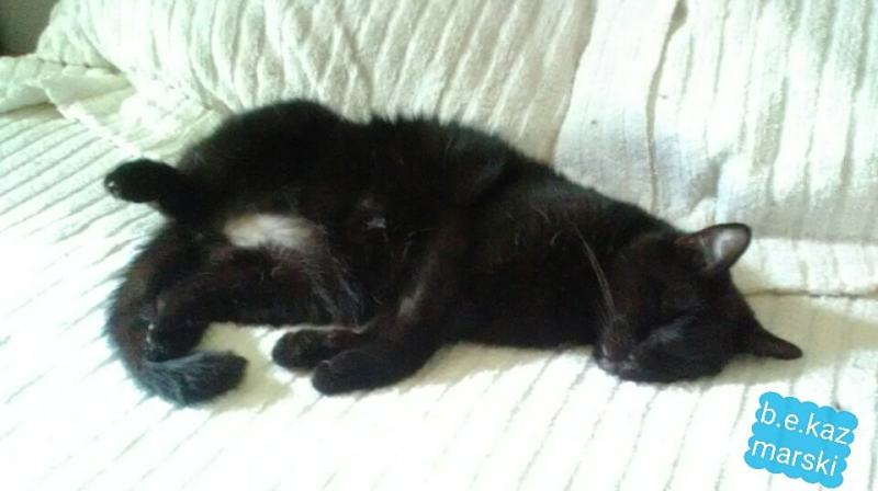 black cat belly