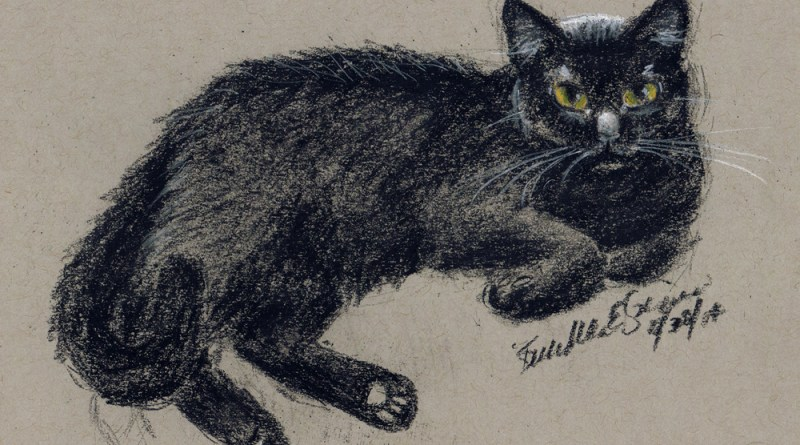 sketch of cat in white and black charcoal pencil on gray toned paper © Bernadette E. Kazmarski