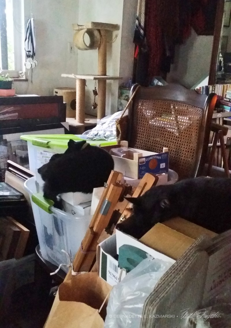 black cats in boxes
