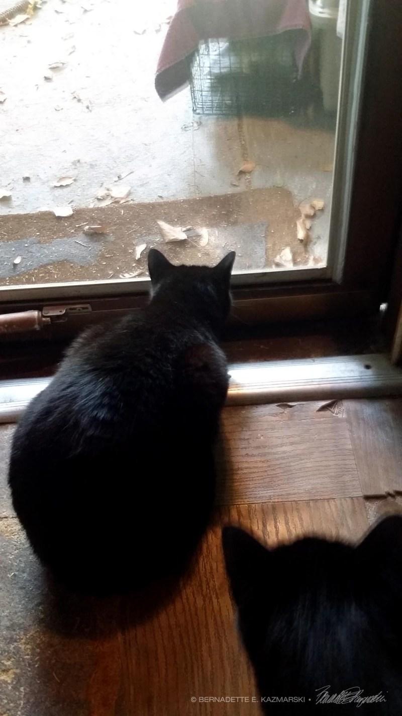 cat looking out door