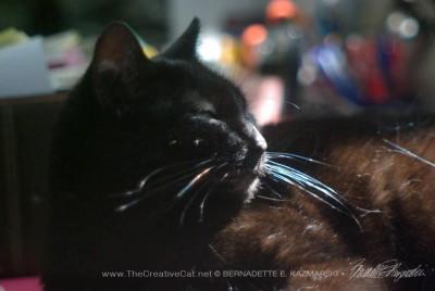 black cat sleeping in sun