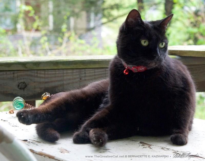 Mimi stops her bath to glare at the catbird.