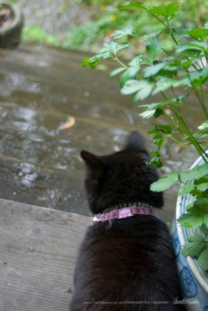It was raining on Mimi's parade today.
