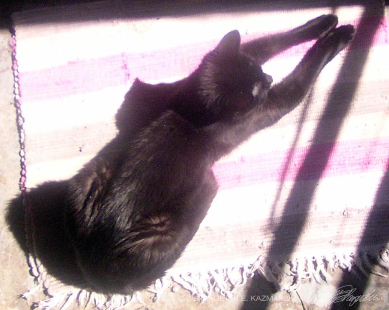 black cat on striped towel