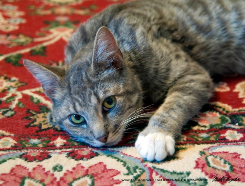 I'm very pretty on this rug.