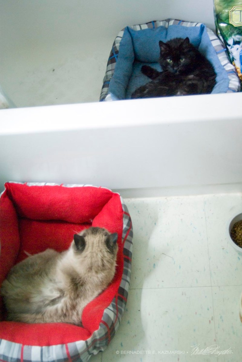 cats in cat beds