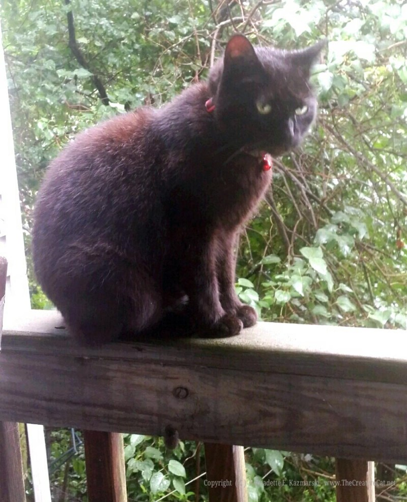 Mimi on the deck rail, a little annoyed.