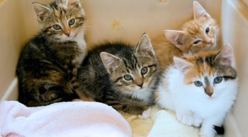 What beautiful kittens!