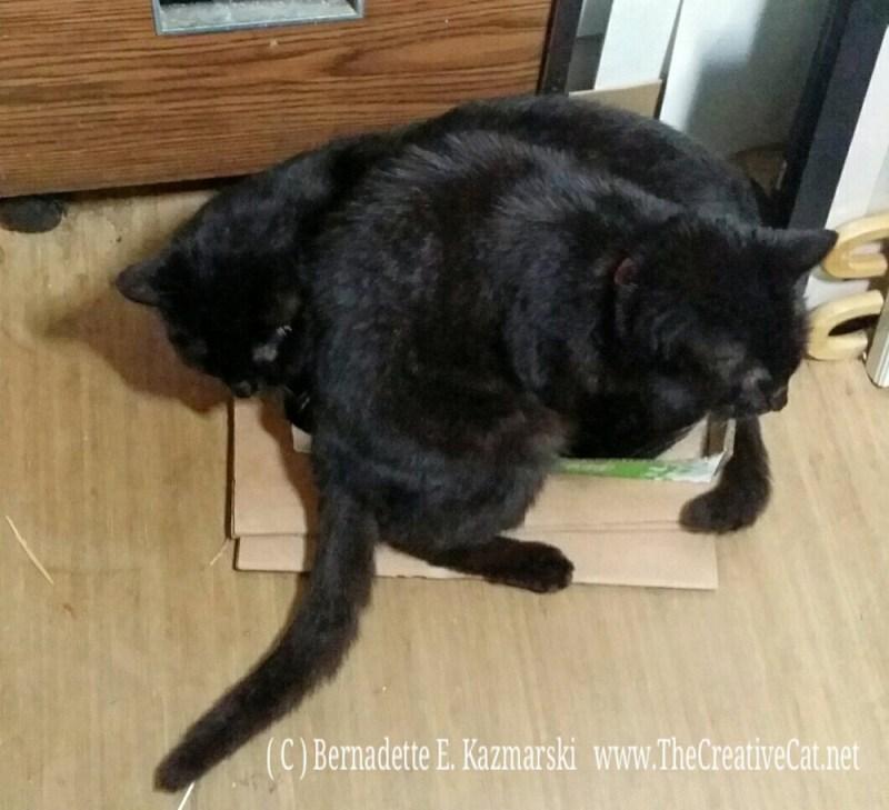 061816-MimiBean-box3