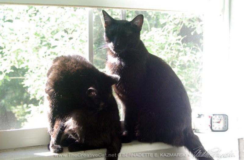 two black cats on windowsill