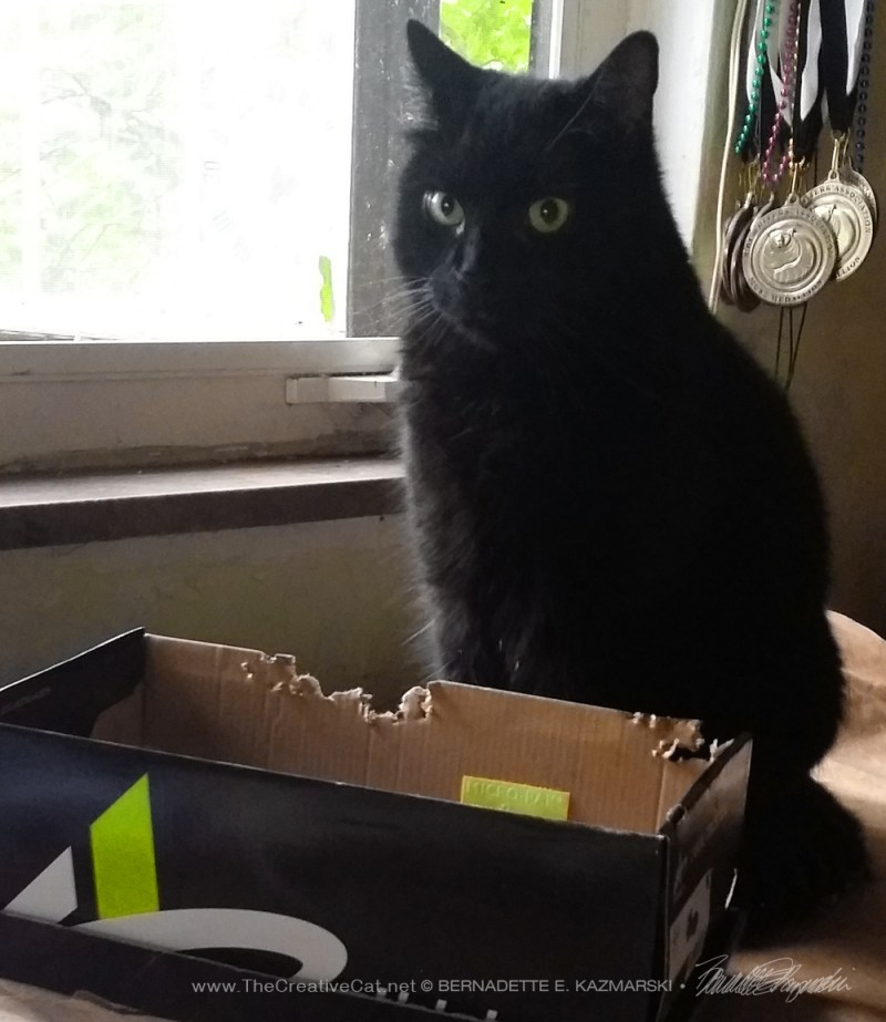 black cat with shoebox