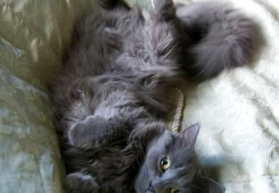 Pet my belly!