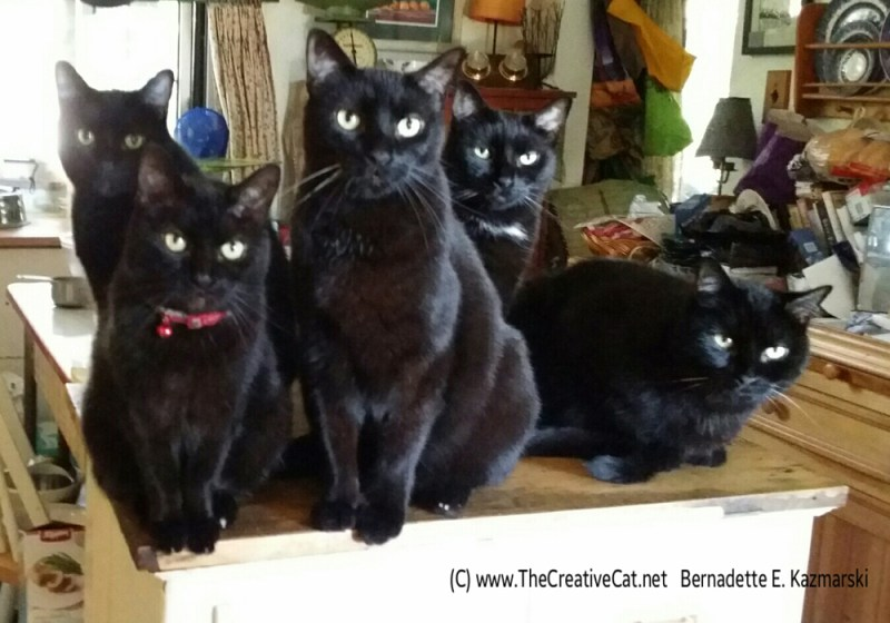 It's such a beautiful morning we have to pose for a family portrait. From left: Mr. Sunshine, Mimi, Giuseppe, Jelly Bean, Mewsette.