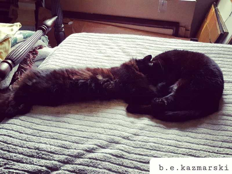 two black cats on bed