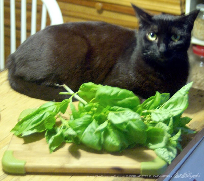Giuseppe poses with the basil for Mlle.