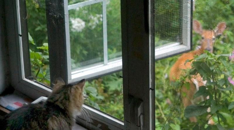 I am watching you, Mama Deerie.