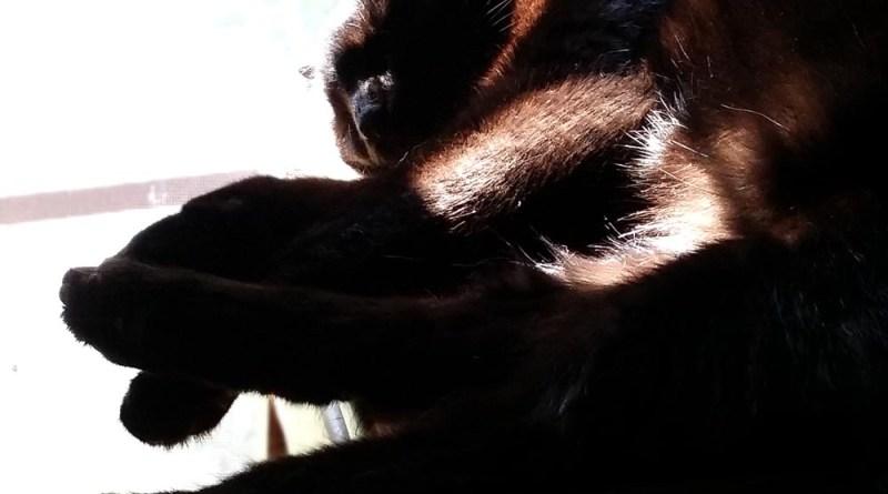 Bella tangled legs.