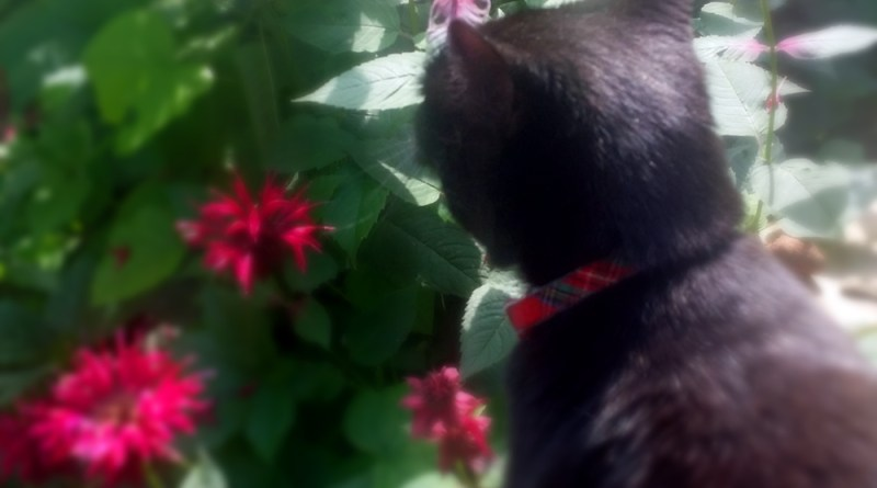 Mimi takes time to stop and smell the flowers.