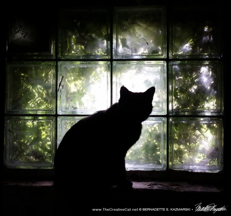 Sienna at the window.