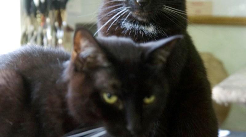 Bean has his eye on a good spot.