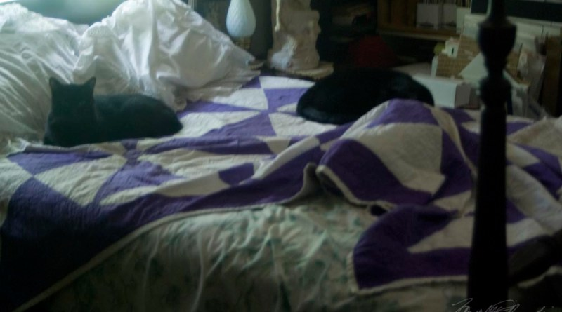 three cats on bed