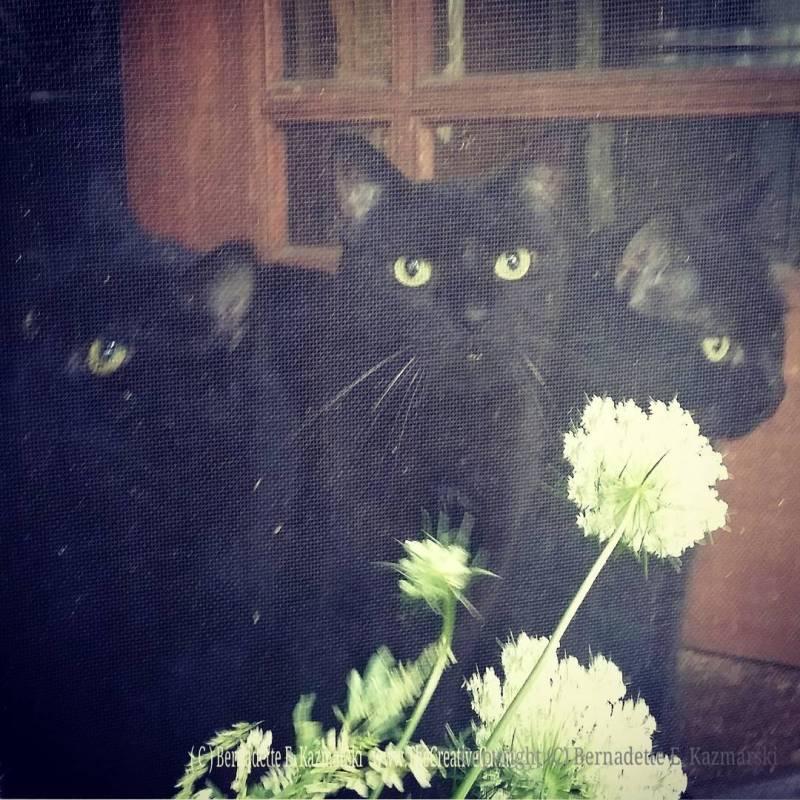 Do you like my wildflowers?