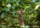 Your Backyard Wildlife Habitat: An Introduction
