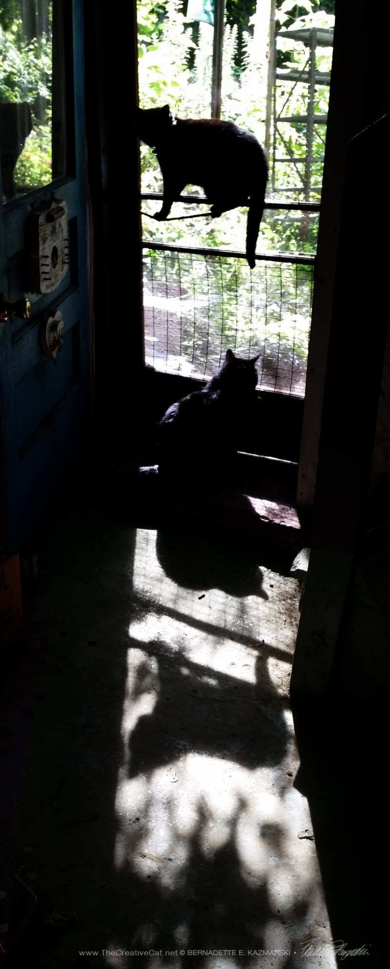 cats and shadows at door