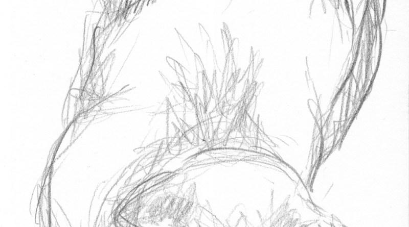 pencil sketch of cat sleeping
