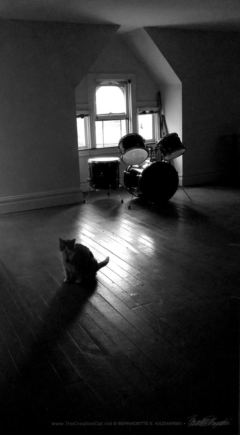 cat with drums