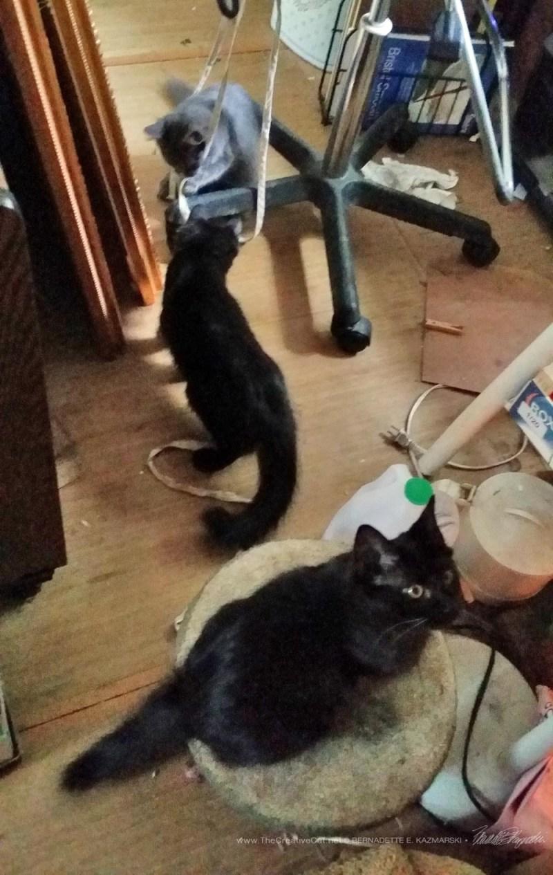 The little three invade my studio.