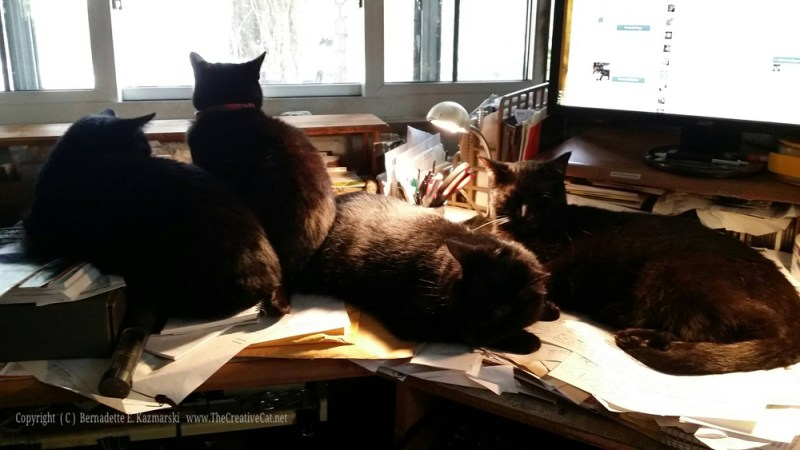 Four cats on desk.