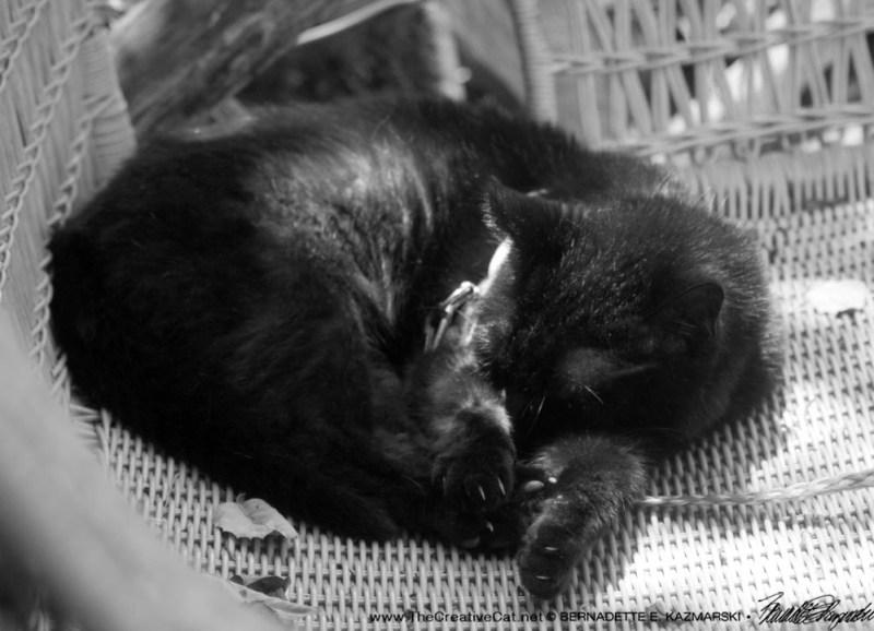 A Wicker Nap