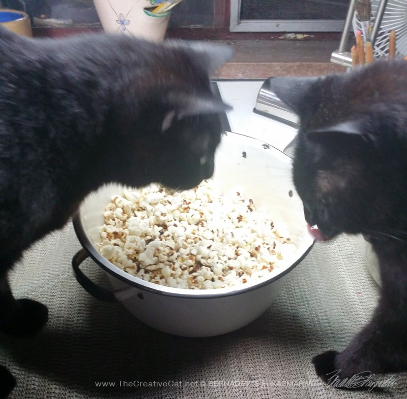 two black cats with popcorn