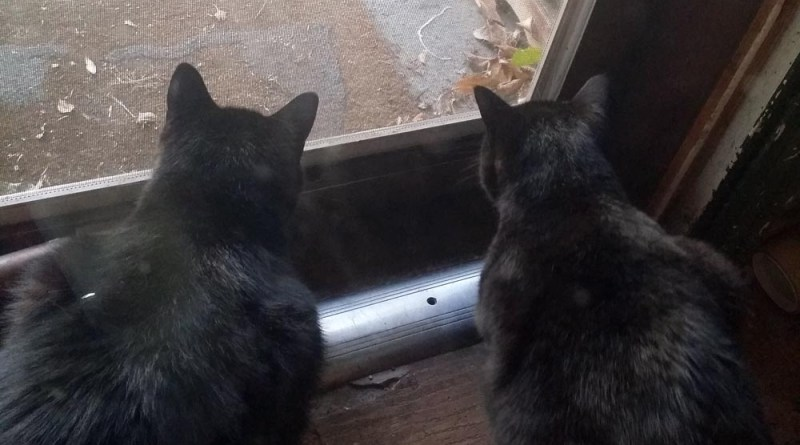 two black cats and bird