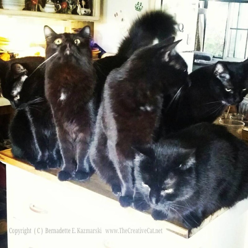 Five black cats gather in the kitchen.