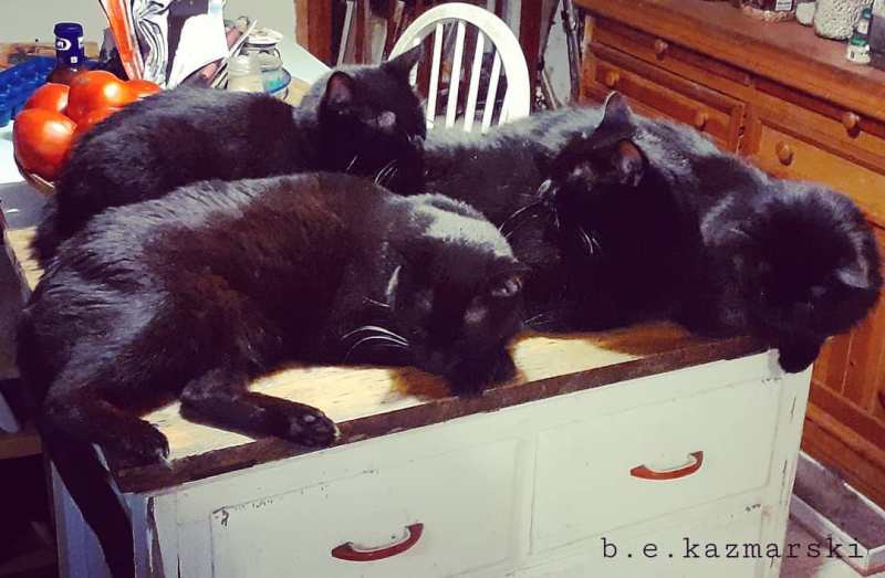 four napping