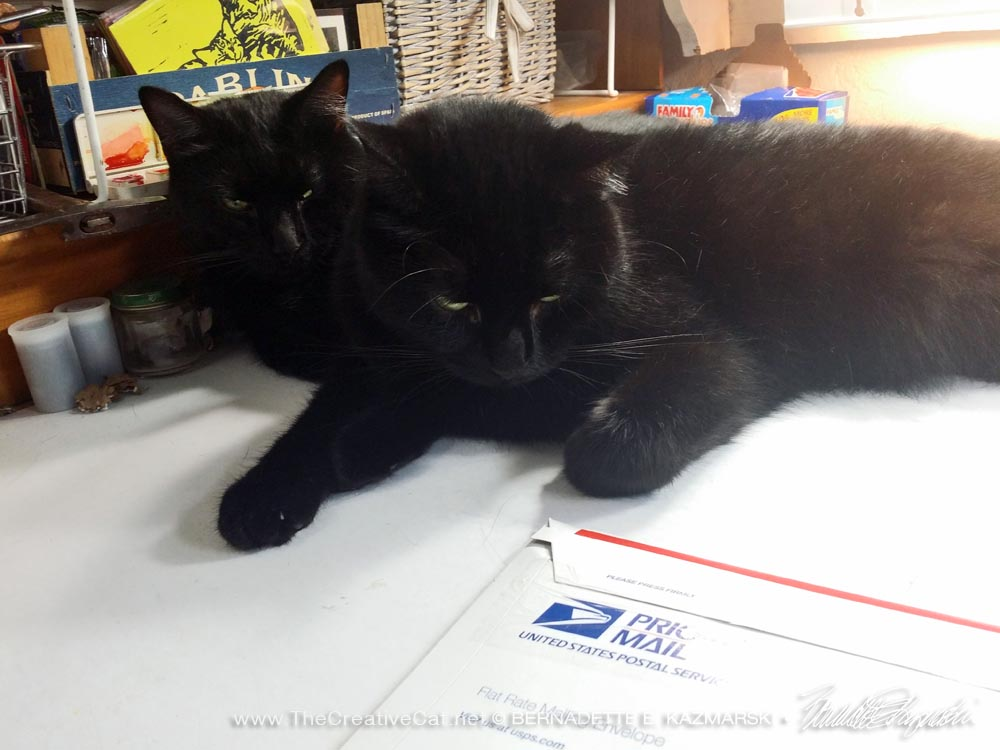 two black cats and priority mail package