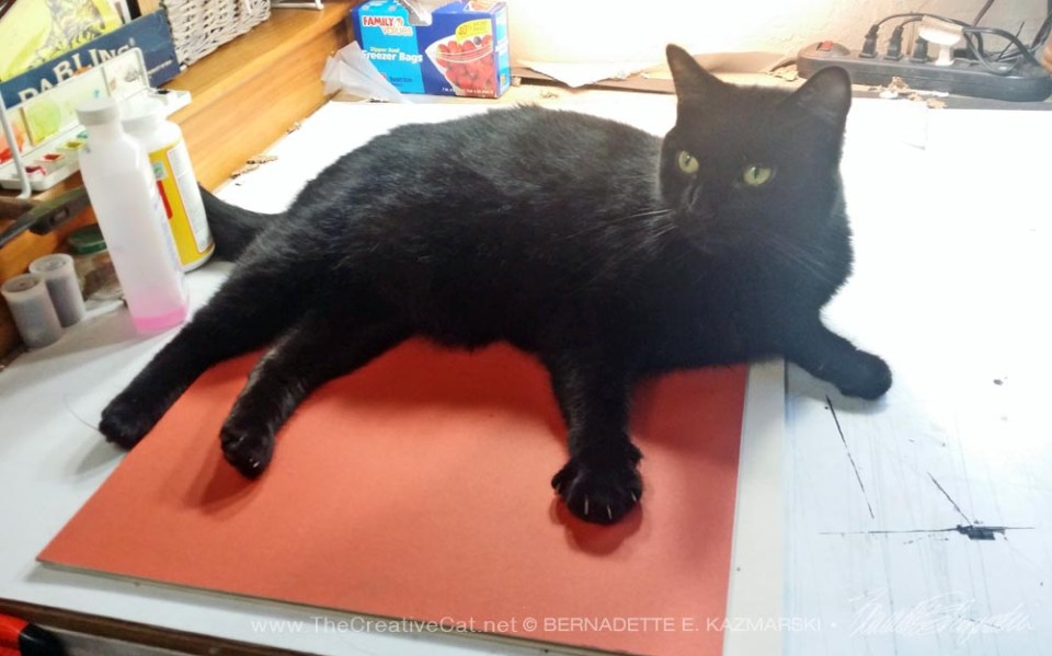 black cat on mat board
