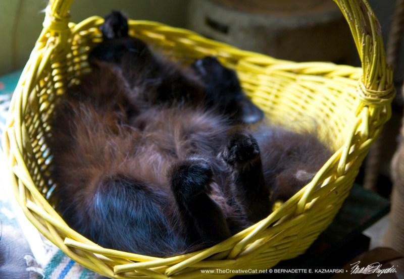 Hamlet in his basket.