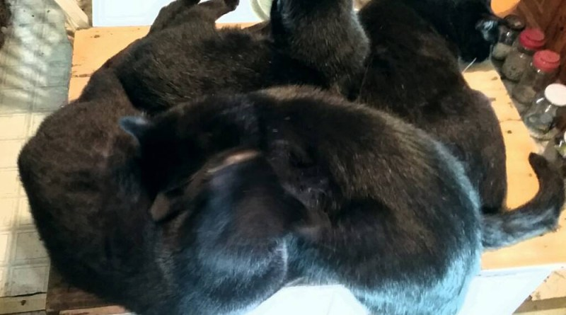 Four conveniently piled up for me to pet.