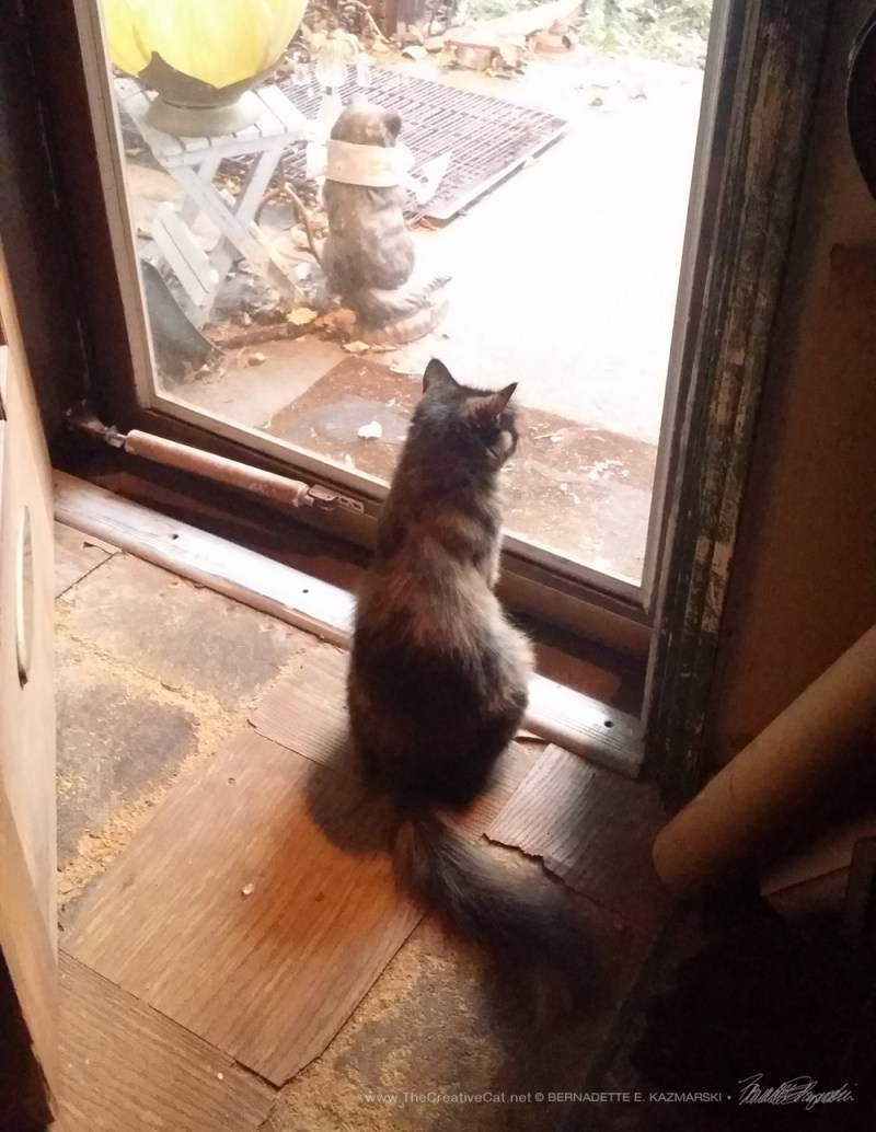 Charm waits at the door.