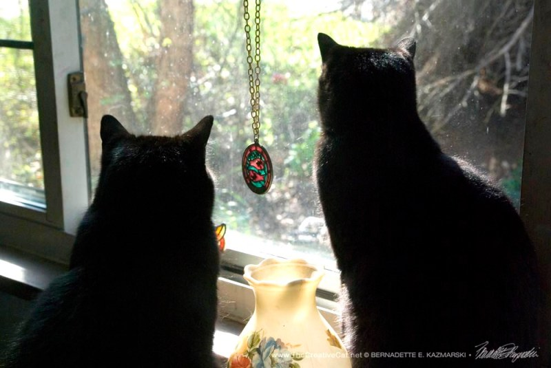 Mewsette and Bella birdwatching.