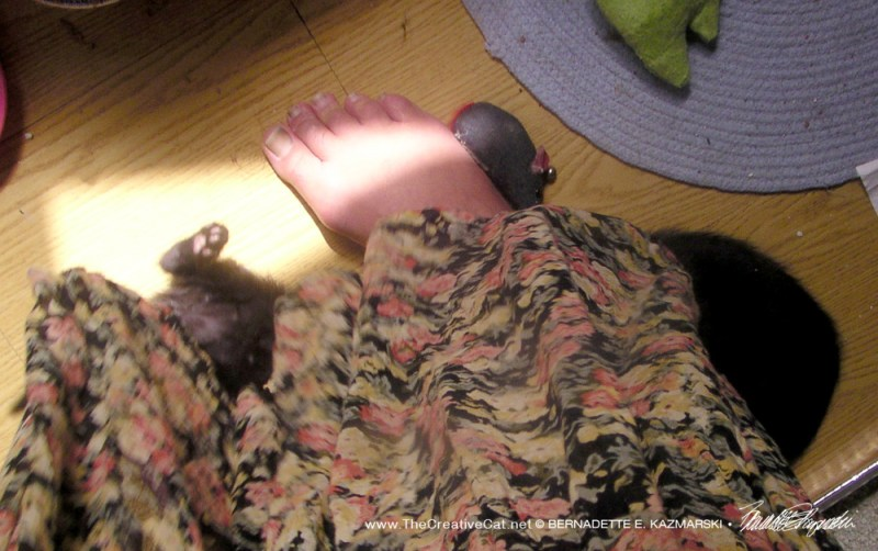 Four kittens are under my skirt.